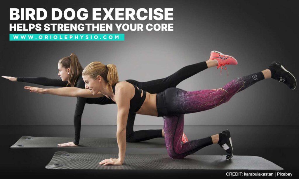 Bird dog exercise helps strengthen your core